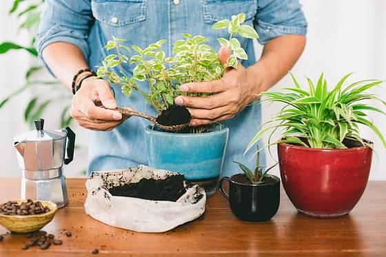Kávová sedlina je skvělé hnojivo