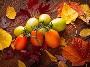 Co dělat s rajčaty na podzim? Nechte je dozrát.