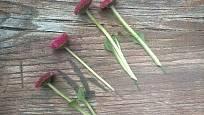 Živé květiny si nadrátkujeme na zelený sekaný drátek.