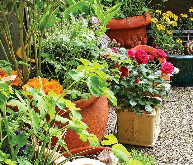 Zazimování balkonových rostlin