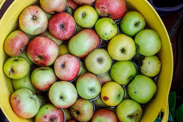 Na domácí med se hodí i starší jablka