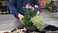 Z několika atraktivních rostlin si můžeme vysadit nádhernou květinovou misku.