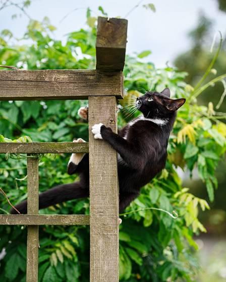Pergolu si zamilují i kočky.