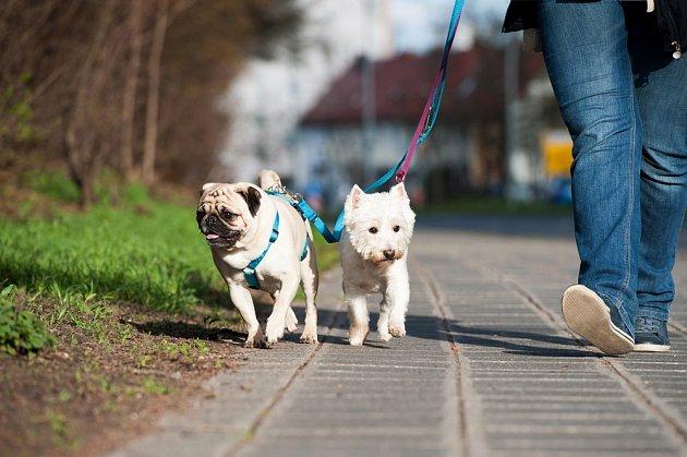 Společná procházka potěší všechny.