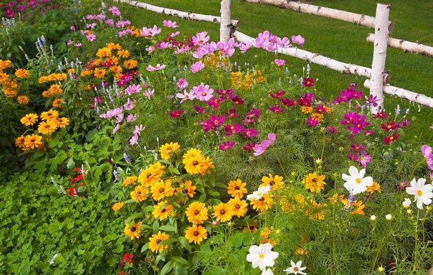 Rostliny odlišných  struktur, barev a velikostí prospějí zvláště malým zahradám.