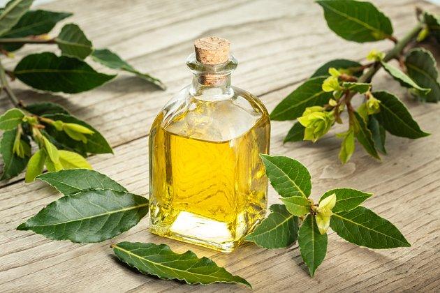 Je možné z něj vyrobit také léčivý olej