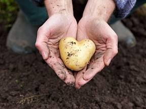 Víte, co je strupovitost brambor?