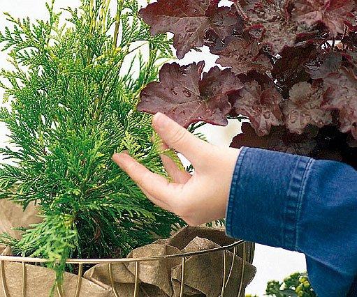 Doprovodné rostliny by měly být stálezelené, aby koš nevypadal prázdně.