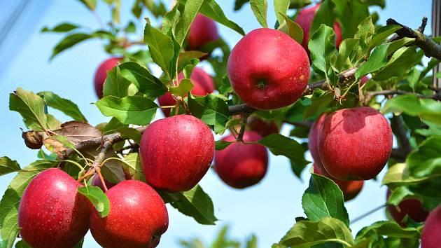 Stromy jsou dominantou každé zahrady, ať už se jedná o ty ovocné, nebo okrasné