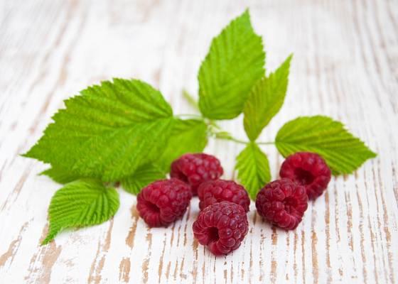Čaj můžeme připravit z listů i plodů maliníku.