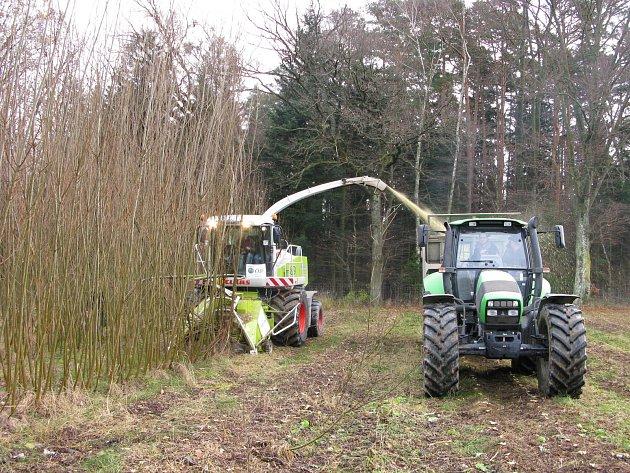 sklizeň biomasy