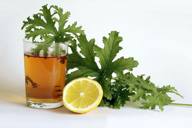 Čaj z listů vonných pelargonií má lahodnou chuť a intenzivní vůni