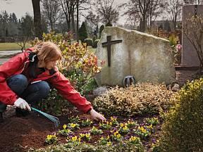 Na jaře můžeme oživit hrob maceškami.