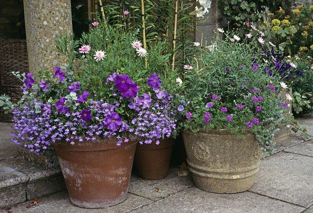 Lobelky krásně doplní další balkónové květiny