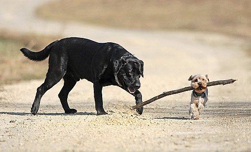 psí plemena