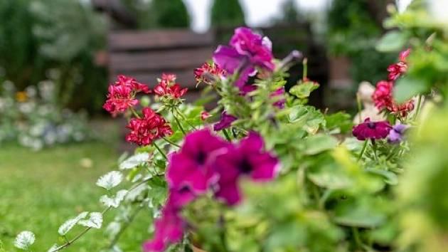 Dejte si na ně raději pozor, aby vaší zahradě neublížily více, než je záhodno.