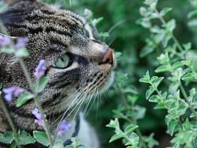 Šanta je pro všechny kočkovité šelmy přímo opojná.