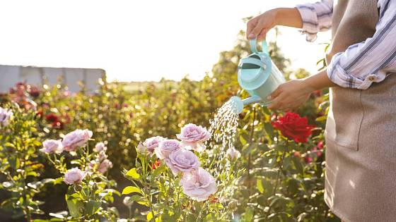 Přečištěnou vodu lze použít k zalévaní zahrady
