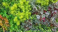 Skladbou pokojovek v zelené stěně vzniká originální živý obraz