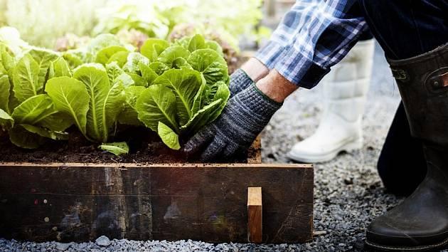 Chcete mít brzo z jara zeleninu i bez skleníku?