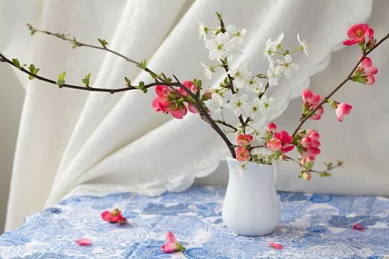 Zda lze dřeviny snadno rychlit závisí i na tom, zda kvetou na starších či nových výhonech