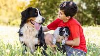 BSP - bernský salašnický pes prostě děti miluje.