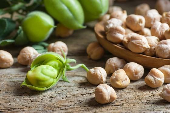 Plody cizrny před vyluštěním a zralá sušená semena