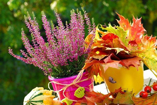 V jednoduchosti je krása - vybarvené javorové listy v hrnku.
