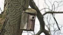 Dřevocementová ptačí budka s prodlouženým vchodem
