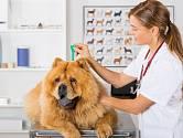 Antiparazitární pipeta se aplikuje na kůži psa