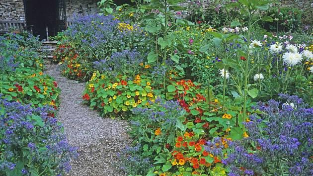 Letničky lichořeřišnice a brutnák rozzáří zahradu, navíc jsou jedlé a léčivé