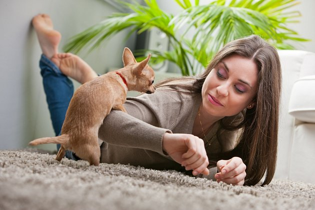 Stejně důsledně je třeba zarazit i psí pokusy o uspokojování se na lidech