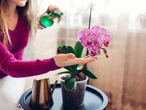 O orchideje se musíme starat s citem, tak jako ony pečují zpětně o nás
