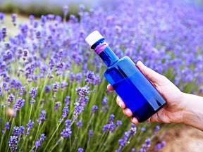 Vyrobte si domácí levandulový olej. Léčí tělo i ducha.