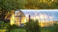 Skleník výrazně rozšíří naše možnosti pěstování.