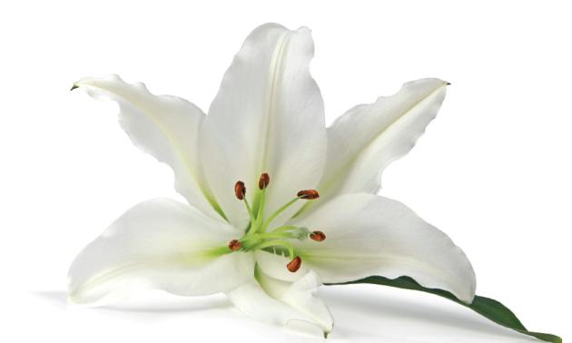 Bílá barva je symbolem nevinnosti, něhy a také čistoty