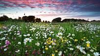 Květinové louky svědčí přírodě, krajině i zahradě