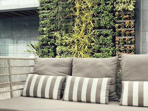 Hlavní péči o zelené stěny představuje kapková závlaha.