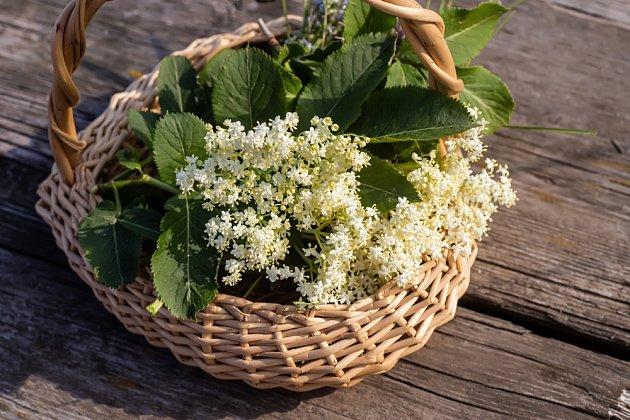 Květy černého bezu obsahují vitamíny a antioxidanty.