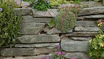 Skromným skalničkám stačí úzké spáry