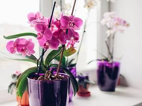 Na jaře se probouzí všechny rostliny, včetně oblíbených a jemně krásných orchidejí