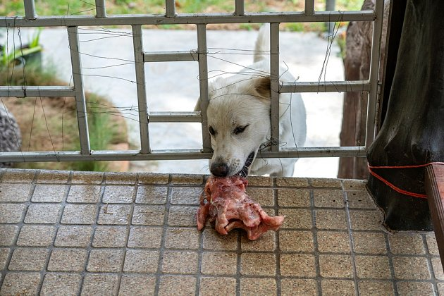 Nikdy nenechávejme svého psa konzumovat maso neznámého původu.