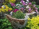 Skalka na zahradě je slast pro oči a přehlídkou krásy.