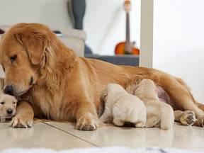Jak se nejlépe nachystat na porod vašeho mazlíčka