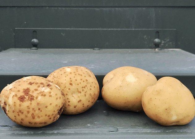 Strupovitost je na bramborách dobře patrná.