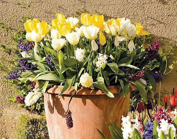 Tulipány většinou nevoní, proto se vyplatí přidat k nim hyacinty