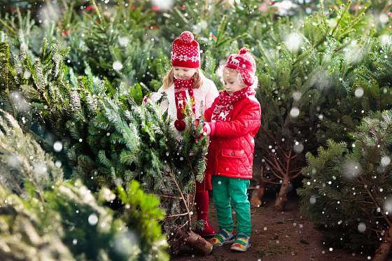 Malí pomocníci při výběru stromků
