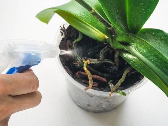 Orchideje roste měkkou vodou