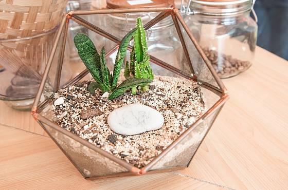 Sukulentní rostliny jsou vhodné pro pěstování v teráriích, floráriích, skleněných nádobách nebo malých demižonech.