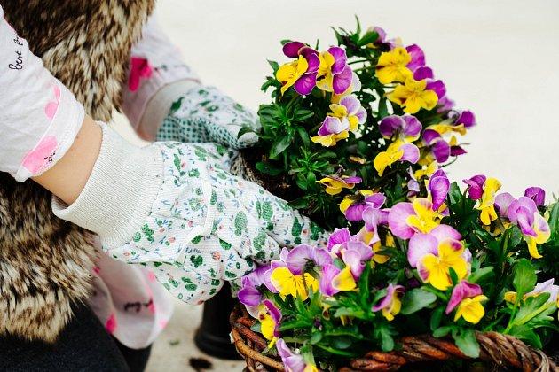 Rychlý nástup květů v jarním období si můžete zajistit výsadbou předpěstovaných sazenic.